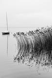Jezioro Lacanau w sezonie zimowym - 195175283