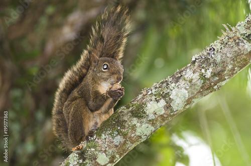 Tuinposter Eekhoorn esquilo