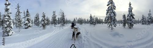 Obraz Lappland - fototapety do salonu