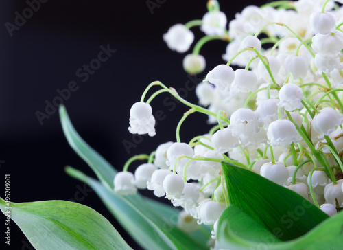 Spring flowers. Spring background. Valentine's Day and Mother's Day background. Close up of Lily of valley flower