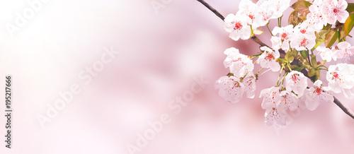 Tuinposter Kersenbloesem Der Frühling ist da!