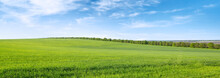 Green Spring Field And Blue Sky With White Clouds.