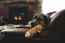 Dog Resting By The Fireplace
