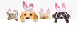 canvas print picture Easter Dogs and Cats Over Web Banner