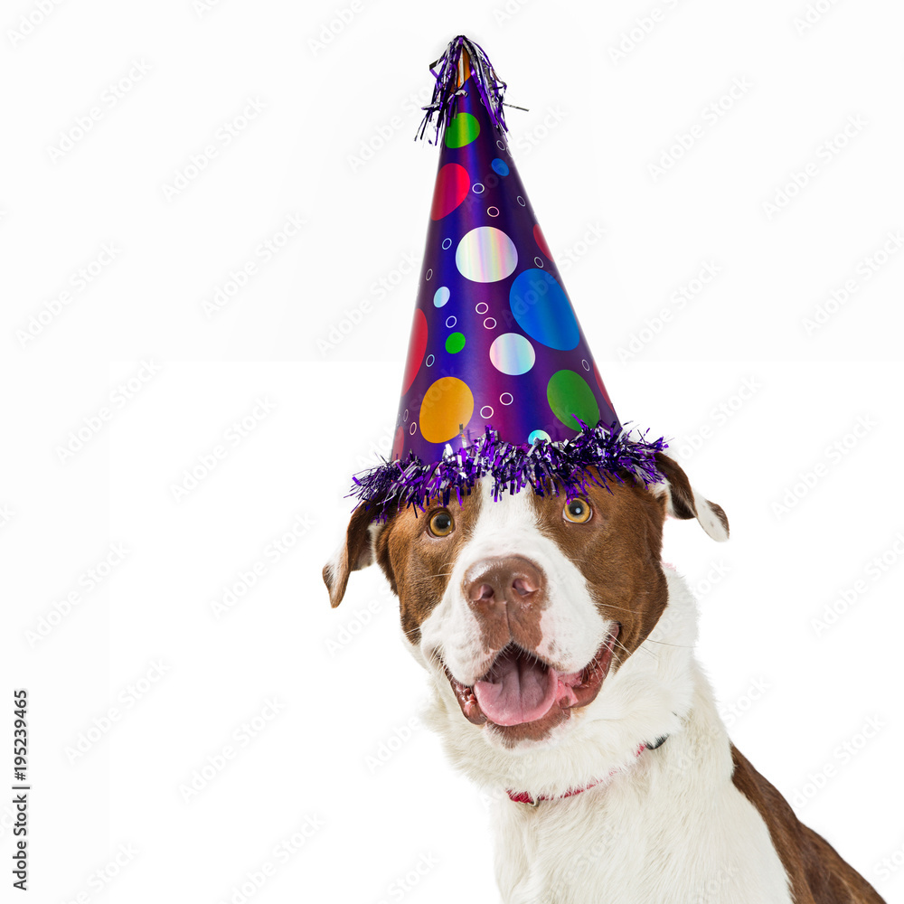 Happy Birthday Dog Wearing Party Hat Foto Poster Wandbilder Bei