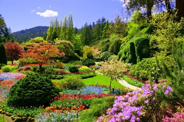 Fototapeta Ogrody Butchart Gardens, Victoria, Canada. View of the colorful flowers of the sunken garden during spring.