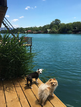Two Dogs On The River Dock