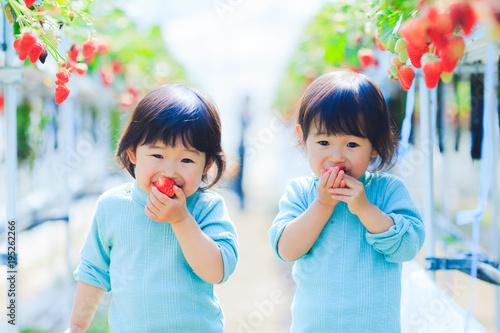 Fotografia  子供とイチゴ狩り