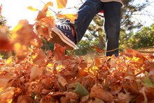Child Walking And Kicking Fall Leaves.