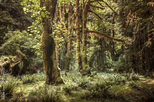 Fotografie, Obraz  Hoh Rain Forest, Olympic National Park, Washington, USA