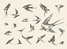 Flock Birds Flying Swallows Drawn Vector Sketch