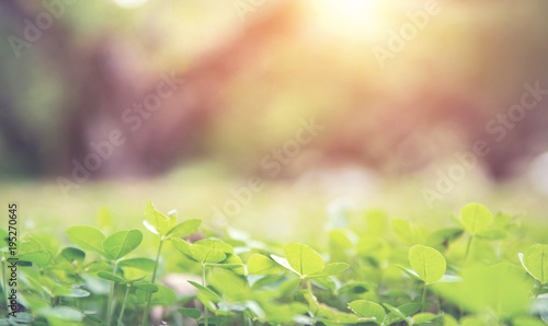 Foto  Close up flowering green forest on spring sunset light background with copy space