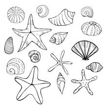 Starfish And Seashells. Vector Sketch  Illustration.