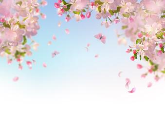 Fototapeta Do przedszkola Spring Cherry Blossom