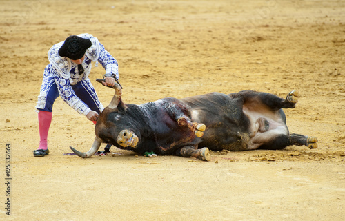 BULLFIGHT IN SEVILLA, SPAIN, MATADOR GIVING FINAL DEATH TO BULL