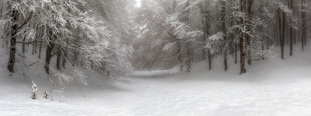Snow-covered forest path, illuminated by day. Background