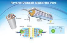 Reverse Osmosis Membrane Pore ...