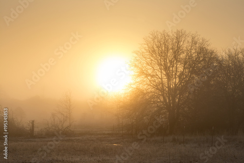 Pinturas sobre lienzo  Sun rising just above horizon in fog across a rural landscape, in hazy oranges a