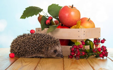 Funny Little Hedgehog Sitting Near Box Of Fruit, On Wooden Table