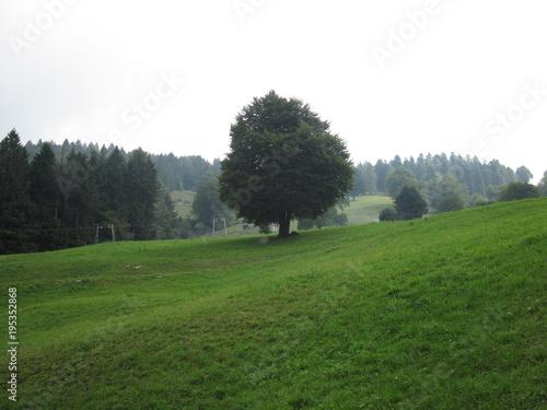 Fotografie, Obraz  Prato di montagna con albero frondoso