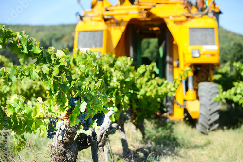 Carta da parati grapes harvesting mechanical machine vehicle in a vineyard during harvest wine s