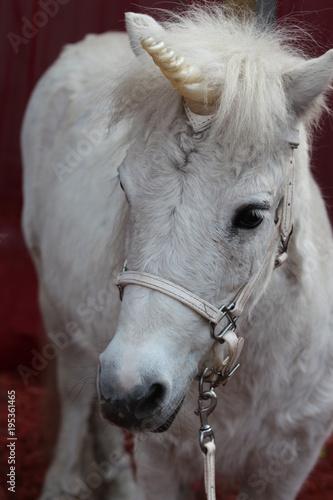 Fotografie, Obraz  Magical Cosplay Pony / Unicorn