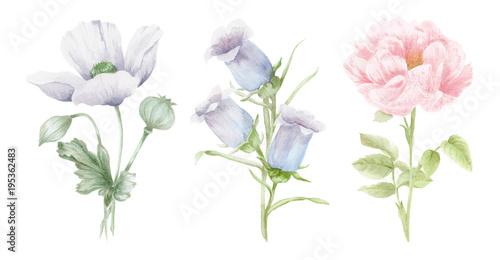 Αφίσα  Watercolor Flower Illustrations - Hand Painted Illustrations of Flowers and Plan