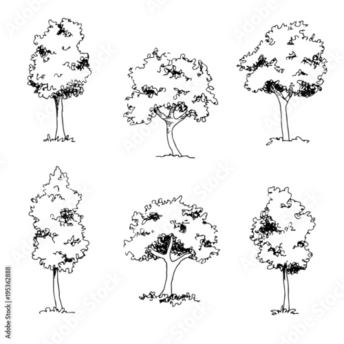 Fotografie, Obraz  Set of hand drawn architect trees, tree silhouette, dendrology sketch collection, graphic template