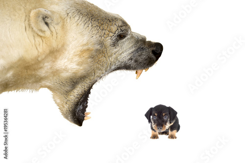 Photo  Polar bear bullying a small dog on a white background