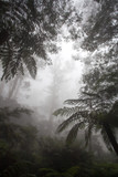 foggy forest in Australia - 195379835