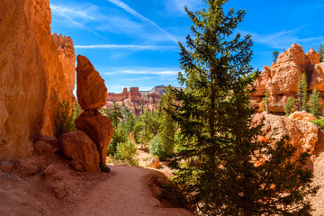 Bryce Canyon National Park - Hiking on the Queens Garden Trail and Najavo Loop into the canyon, Utah, USA.