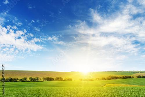 Foto op Plexiglas Weide, Moeras Bright dawn over corn field.