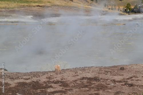 Papiers peints Taupe Yellowstone