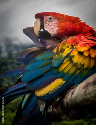 Amazon Jungle Parrot