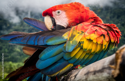 Foto op Plexiglas Papegaai Amazon Jungle Parrot