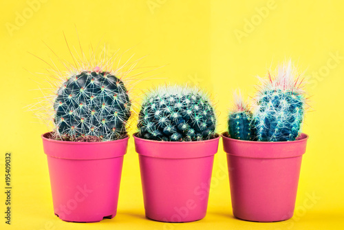Deurstickers Cactus Tiny Cactus in the Pot on Bright Neon Background. Saturated Image