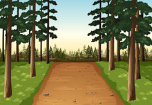 Background Scene With Pine For...