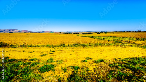 Poster Oranje Landscape with the fertile farmlands along highway R26, in the Free State province of South Africa
