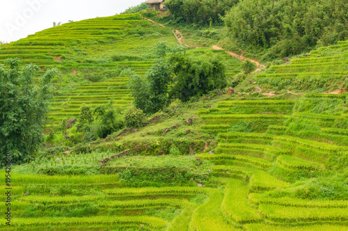 Foto  Hill with rice terraces and mud path, buffalo track