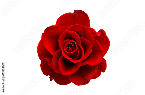 Recess Fitting Roses red rose isolated