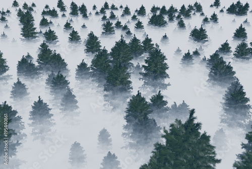 korony-drzew-iglastych-we-mgle