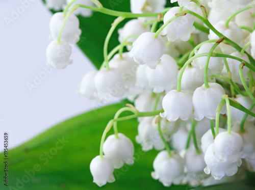 Green-muguet bouquet  Close-up