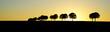 canvas print picture - Landschaft - Baumreihe mit Sonnenuntergang, Banner