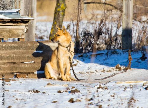 Dog on the chain near the house Canvas Print