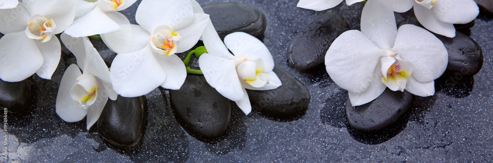 Fototapety, obrazy: White orchids flowers and spa stones .