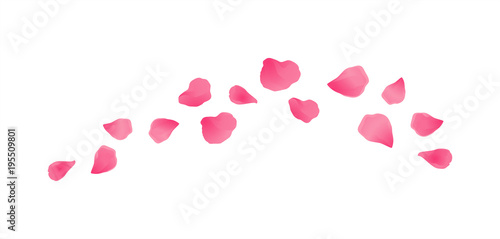 Stampa su Tela Pink flying petals isolated on White background