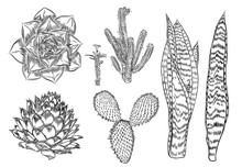 Cactus Set. Wild Cactus Forest Elements With Agave, Saguaro, And Prickly Pear. Hand Drawn. Vector.