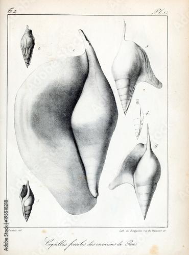 Deurstickers Aquarel Gezicht Fossil shells.