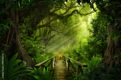 Tuinposter Jungle Asian tropical rainforest