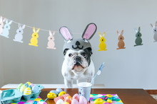 Dog With Rabbit Hat On Table F...